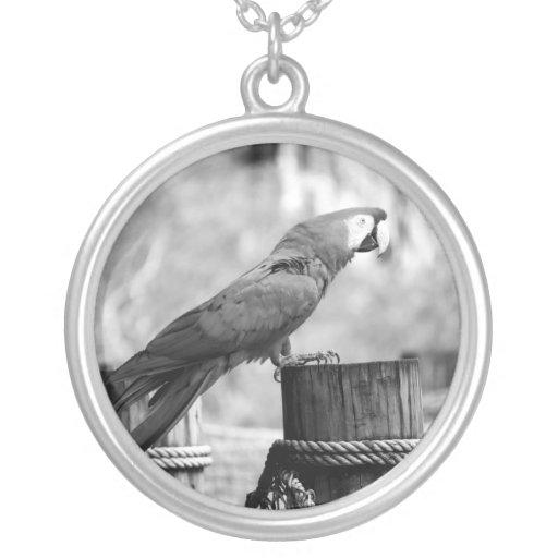 imagen del animal del bw del pájaro del macaw colgante redondo