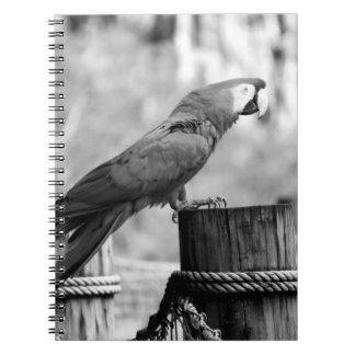 imagen del animal del bw del pájaro del macaw libreta