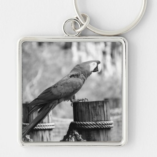 imagen del animal del bw del pájaro del macaw llaveros personalizados