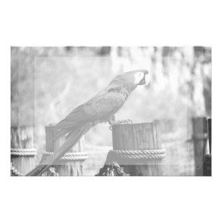 imagen del animal del bw del pájaro del macaw papeleria personalizada