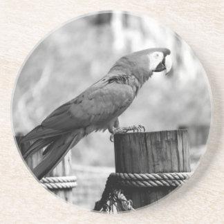 imagen del animal del bw del pájaro del macaw posavasos para bebidas