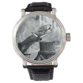 imagen del animal del bw del pájaro del macaw relojes de mano