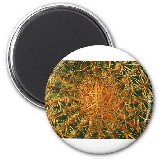 Imagen del cactus imán redondo 5 cm