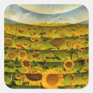 Imagen del campo del girasol pegatina cuadrada