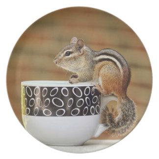 Imagen del Chipmunk con la taza de café de Latte Plato De Comida