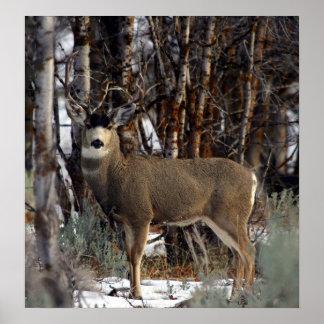 Imagen del ciervo mula, 4 poster