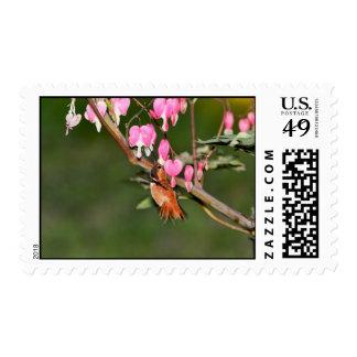 Imagen del colibrí y de las flores