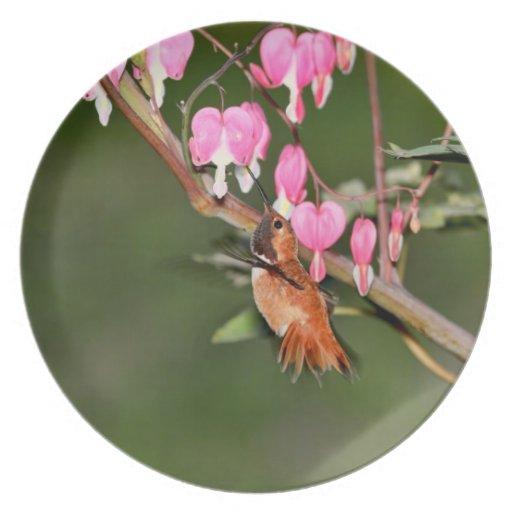 Imagen del colibrí y de las flores plato de comida