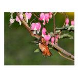 Imagen del colibrí y de las flores postal