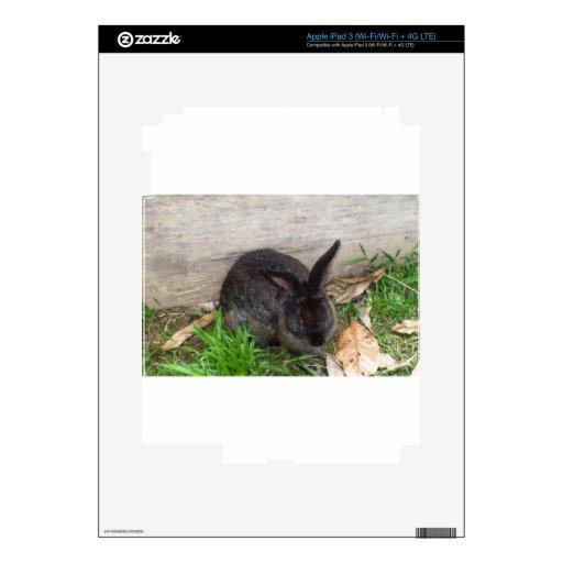 Imagen del conejito pegatinas skins para iPad 3