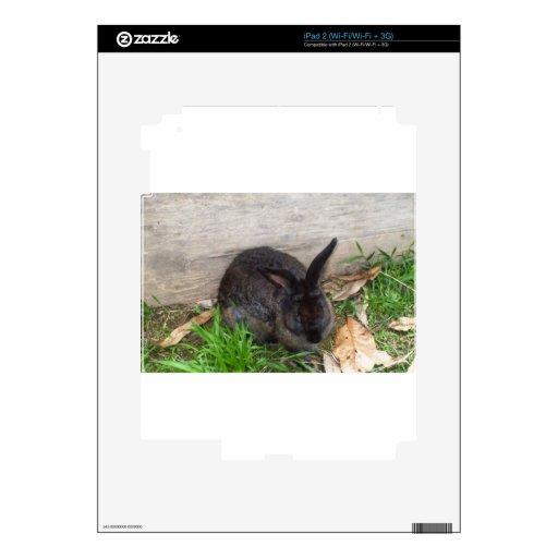 Imagen del conejito skins para eliPad 2