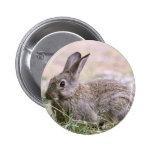 Imagen del conejo pin
