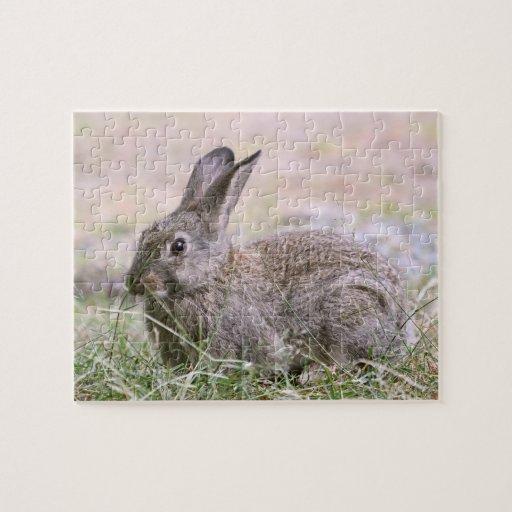 Imagen del conejo puzzles con fotos