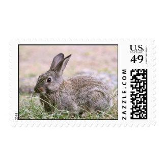 Imagen del conejo franqueo