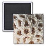 Imagen del coral imán de frigorifico