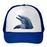 Imagen del delfín gorra