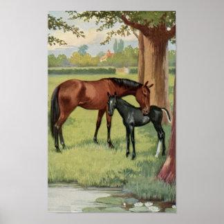 Imagen del Equestrian del caballo de la potra del  Póster