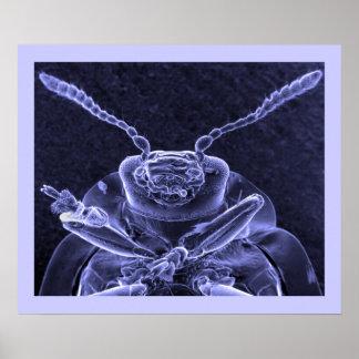 Imagen del escarabajo de hoja - microscopio electr posters