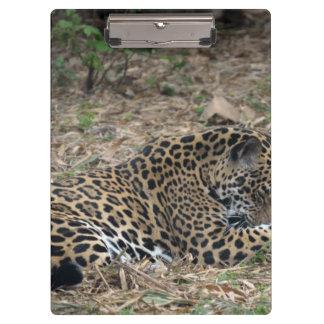 imagen del gato grande de la pierna de la preparac