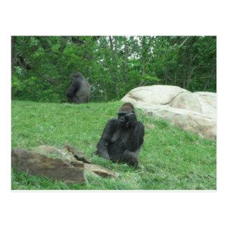 Imagen del gorila tarjeta postal