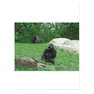 Imagen del gorila tarjetas postales