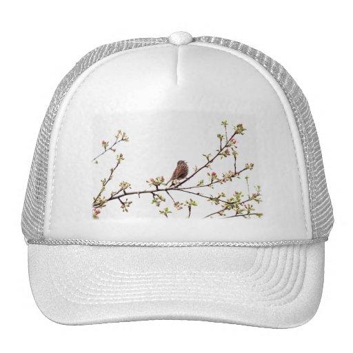Imagen del gorrión que canta en árbol floreciente gorra