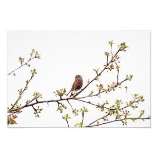 Imagen del gorrión que canta en árbol floreciente foto