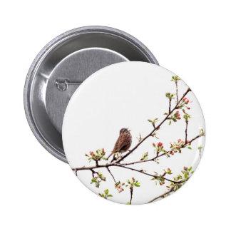 Imagen del gorrión que canta en árbol floreciente pin redondo 5 cm