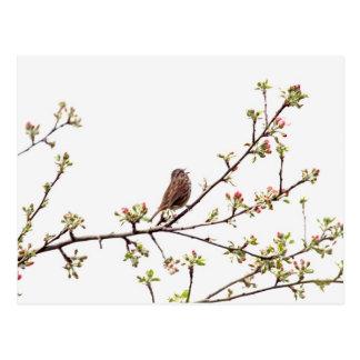 Imagen del gorrión que canta en árbol floreciente tarjetas postales