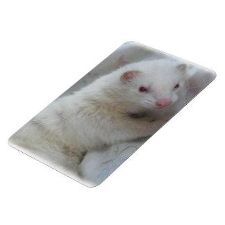 Imagen del hurón del albino iman rectangular