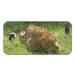 Imagen del leopardo en el caso de Iphone 5 iPhone 5 Coberturas