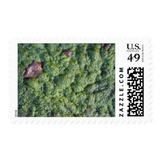 Imagen del limo sellos