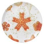 Imagen del naturalista del vintage de las estrella plato