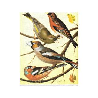 Imagen del pájaro del vintage impresión en lienzo