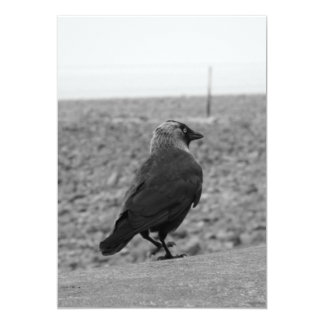 Imagen del pájaro. Grajo Invitación