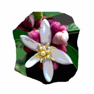 Imagen del poster del flor del limón de la fruta c esculturas fotográficas