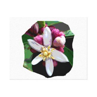 Imagen del poster del flor del limón de la fruta c impresión de lienzo