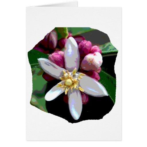 Imagen del poster del flor del limón de la fruta c tarjeta