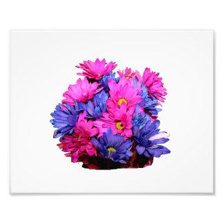 Imagen del ramo de la flor de la margarita rosada  fotografías