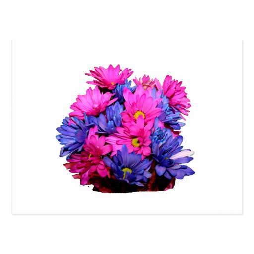 Imagen del ramo de la flor de la margarita rosada tarjetas postales