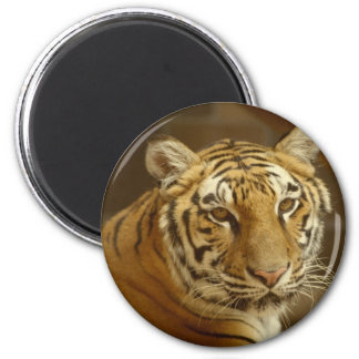 Imagen del tigre imán redondo 5 cm