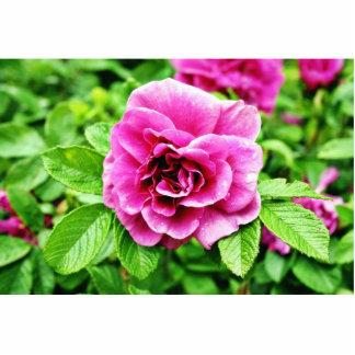 Imagen detallada de la flor color de rosa 3 esculturas fotográficas