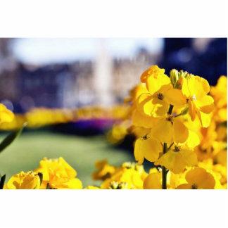 Imagen detallada de una flor amarilla con la ciuda esculturas fotograficas