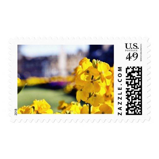 Imagen detallada de una flor amarilla con la sellos