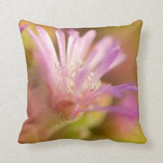 Imagen difundida de una flor suculenta colorida cojines