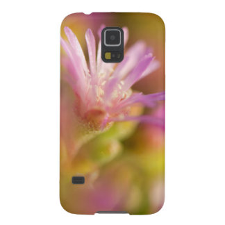 Imagen difundida de una flor suculenta colorida carcasa de galaxy s5
