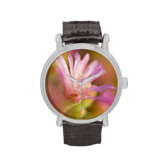 Imagen difundida de una flor suculenta colorida reloj de mano