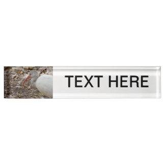 imagen dirigida manchada del pájaro de Ibis
