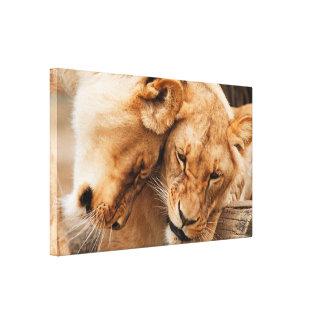 Imagen dulce de dos leones Nuzzling la impresión d Impresiones En Lona Estiradas
