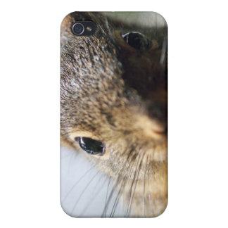 Imagen extrema de la ardilla del primer iPhone 4/4S carcasa